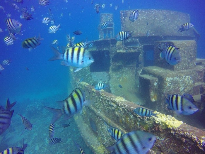 atlantic princess wreck, bayahibe, wreck dive excursion, shipwreck dominican republic