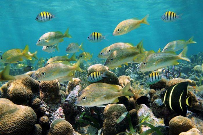 Marine Life at Catalina Island Snorkeling Excursion from Punta Cana