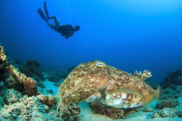 Diver Scuba Diving in Saona Island