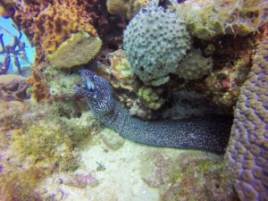 Eel in Saona Island Diving Excursion