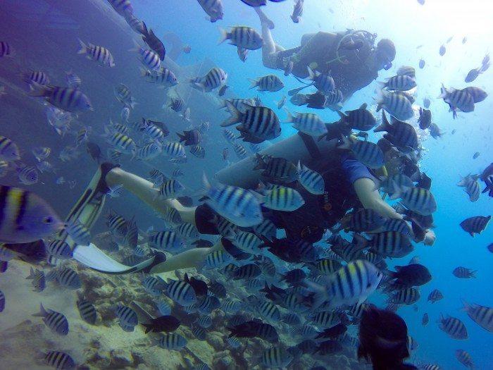 Puero Plata Diving