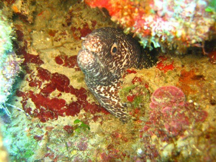 scuba diving puerto plata