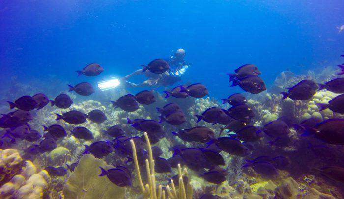 Saona Island Excursion