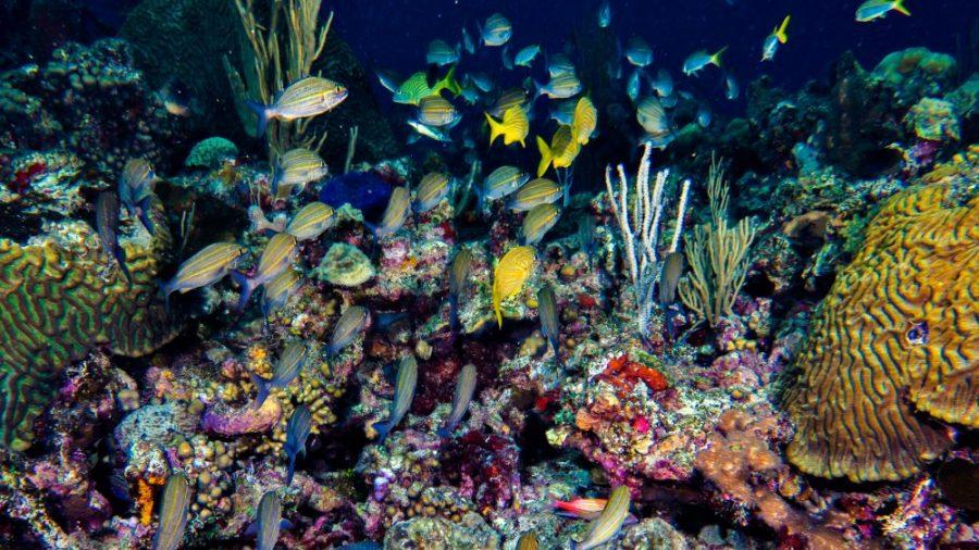 Scuba_Diving_Puerto_Plata