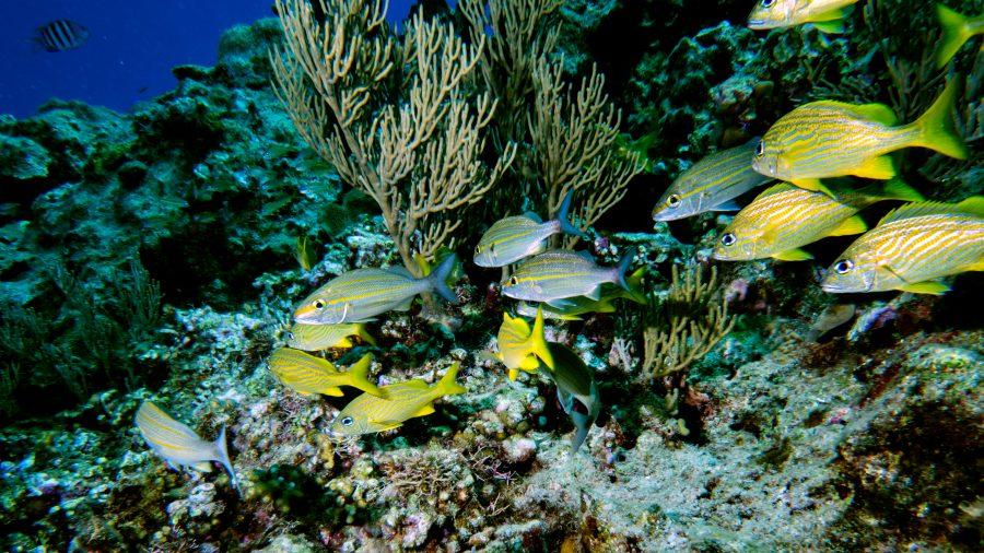 Puerto_Plata_Scuba_Diving