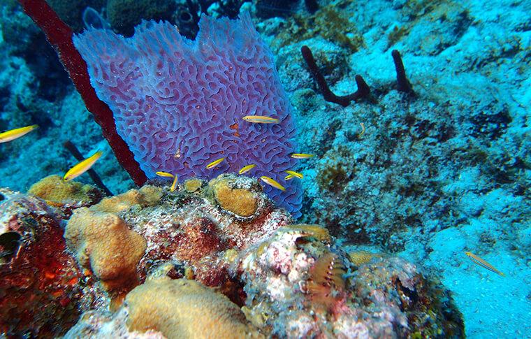 Isla_Catalina_Snorkeling