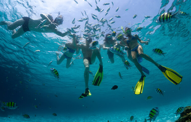 Group of snorkleres with flippers on with fish swimming around them