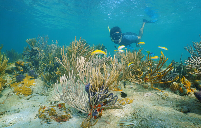 Punta-Cana-Snorkeling
