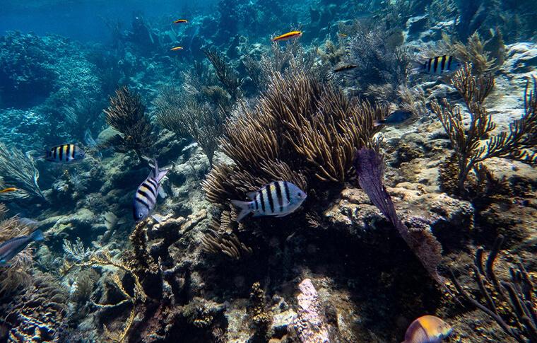 Punta_Cana_Snorkeling