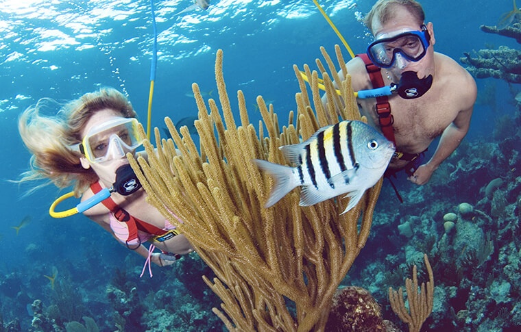 2 snorkelers behind a yellow coral plant with tropical fish swimming
