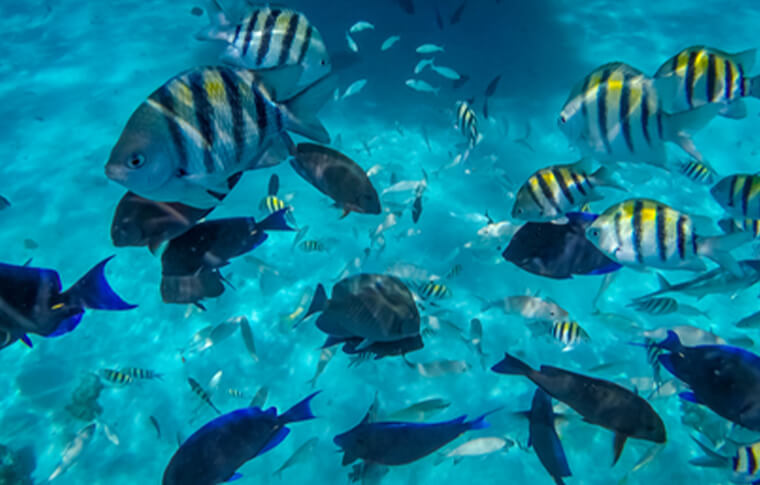 Multiple fish swimming in the blue ocean