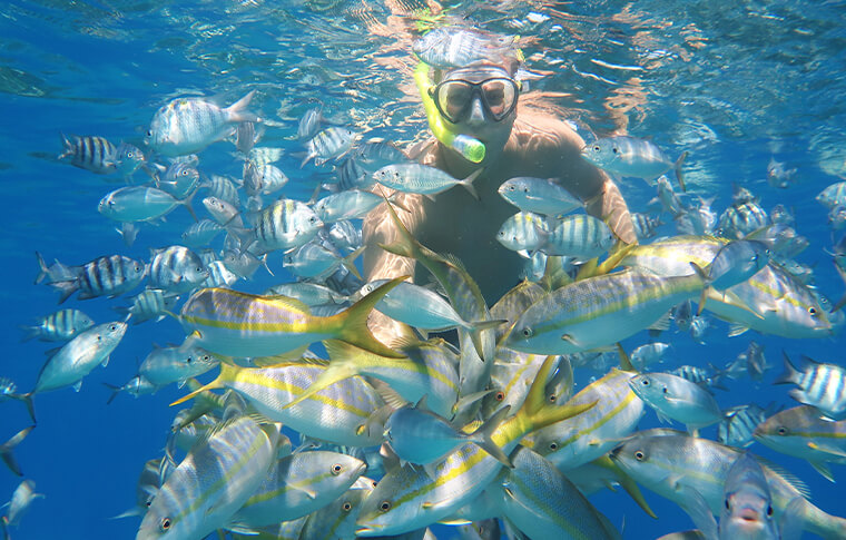 Man swimming through shoal of tropical fish