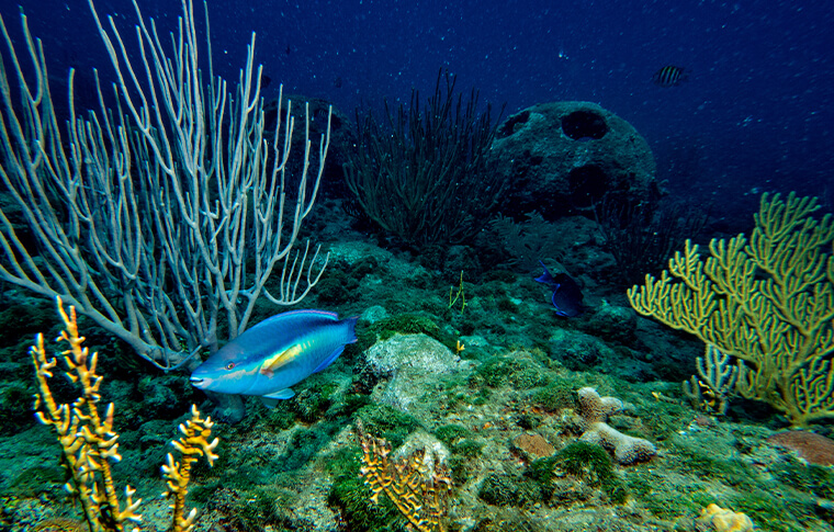 Blue fish swimming through the coral