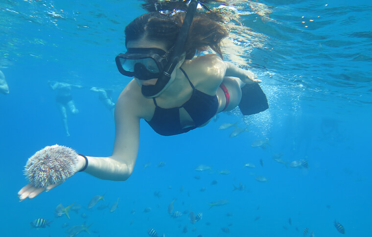 Snorkler holding sealife in her hand underwater
