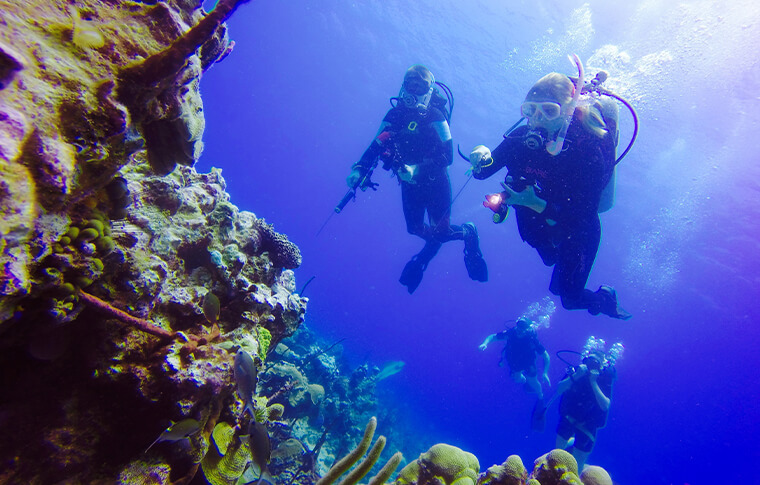 2 divers admiring the coral wall