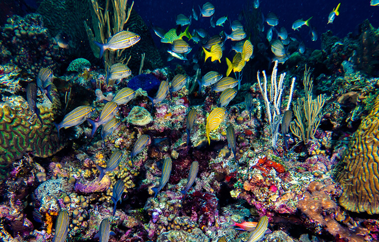 Bright colourful reef with numerous fish swimming