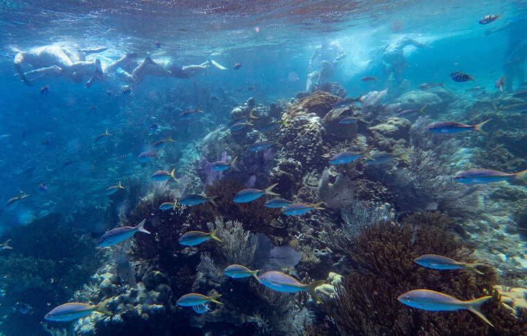 Enormous sea coral garden with a shoal of blue tropical fish