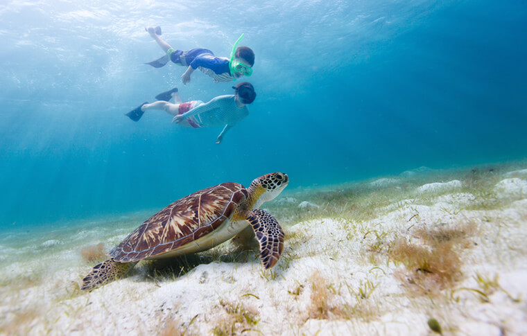 2 divers following a turtle swimming on the sea bed