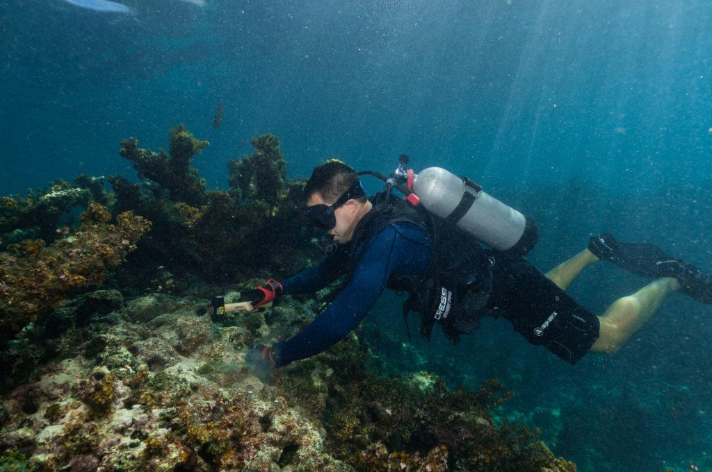 Coral_Restoration_Punta_Cana