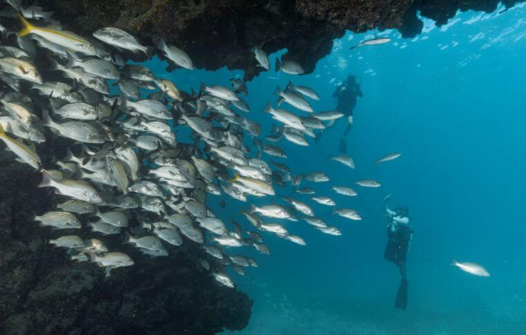 Shoal of fish swimming around a cave while divers watch on from the background